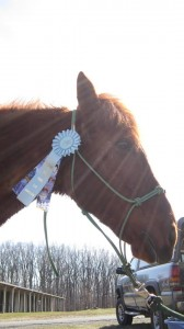 Sooner with his completion ribbon.