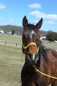 pretty mare