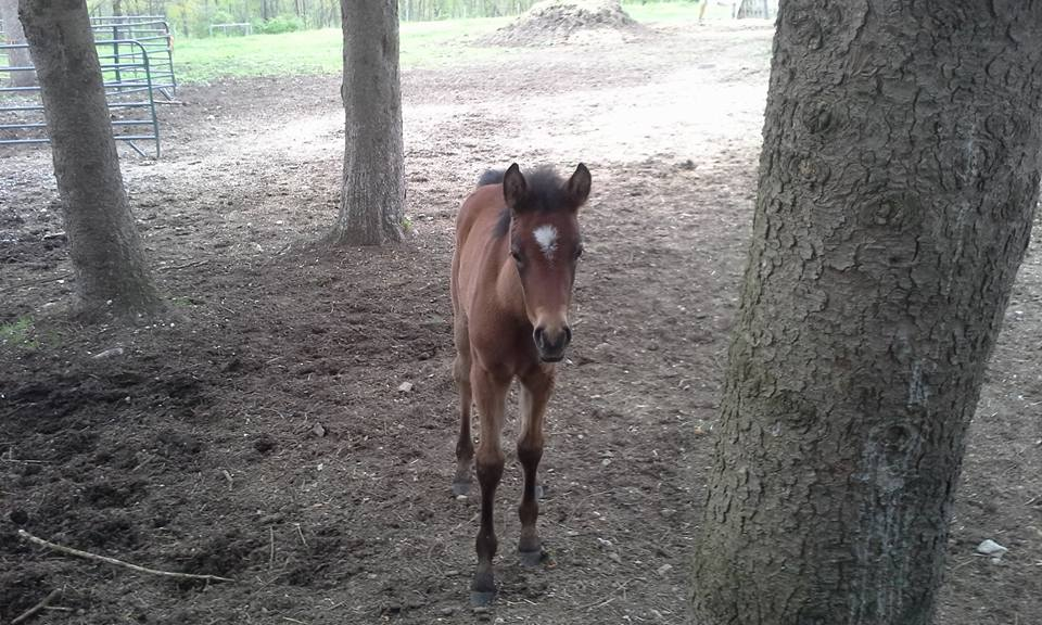 She has no fear at 25 days old she leaves her mother and explores the pasture, she also spends a lot of time with the other mares.