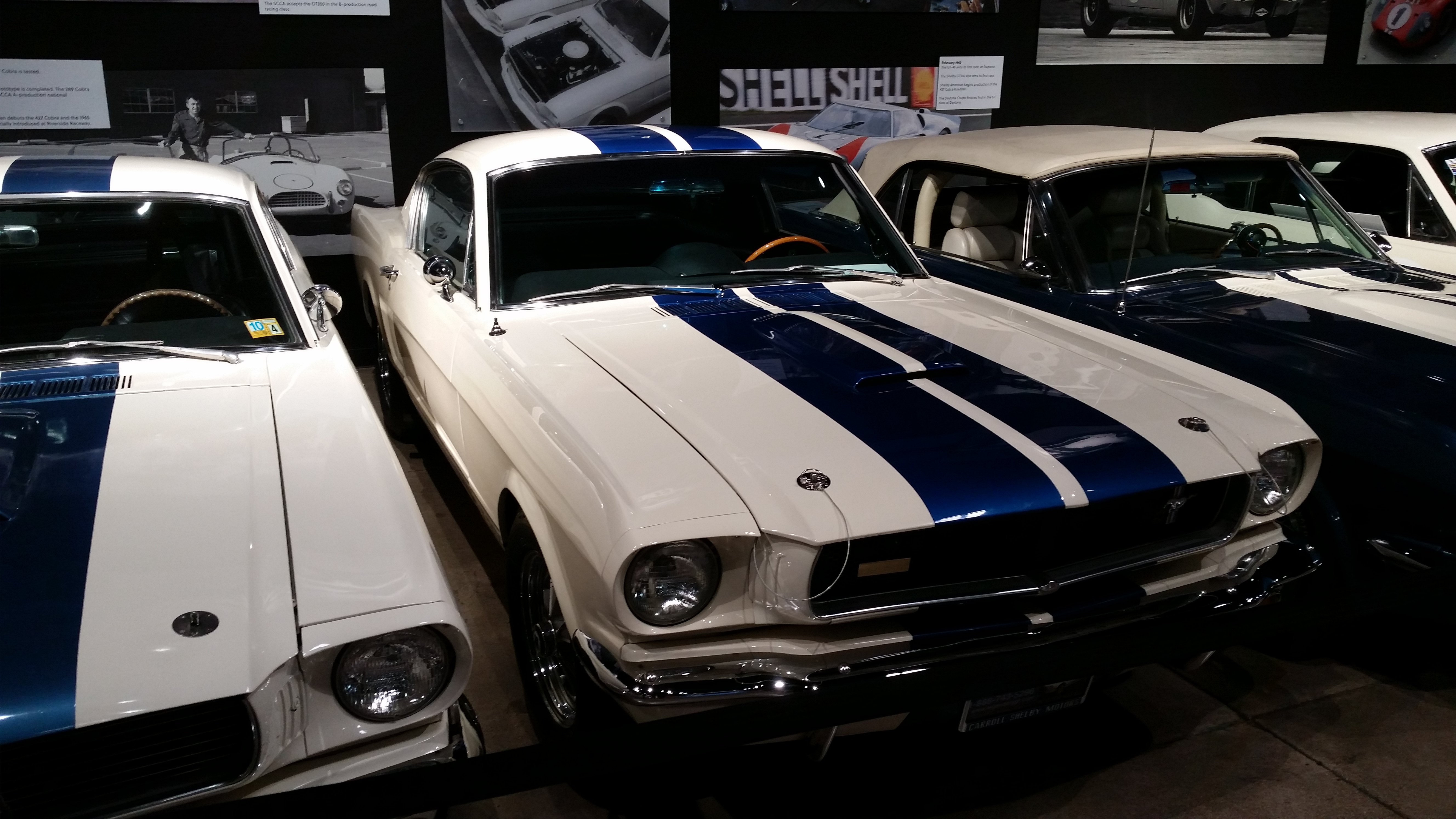 shelby6