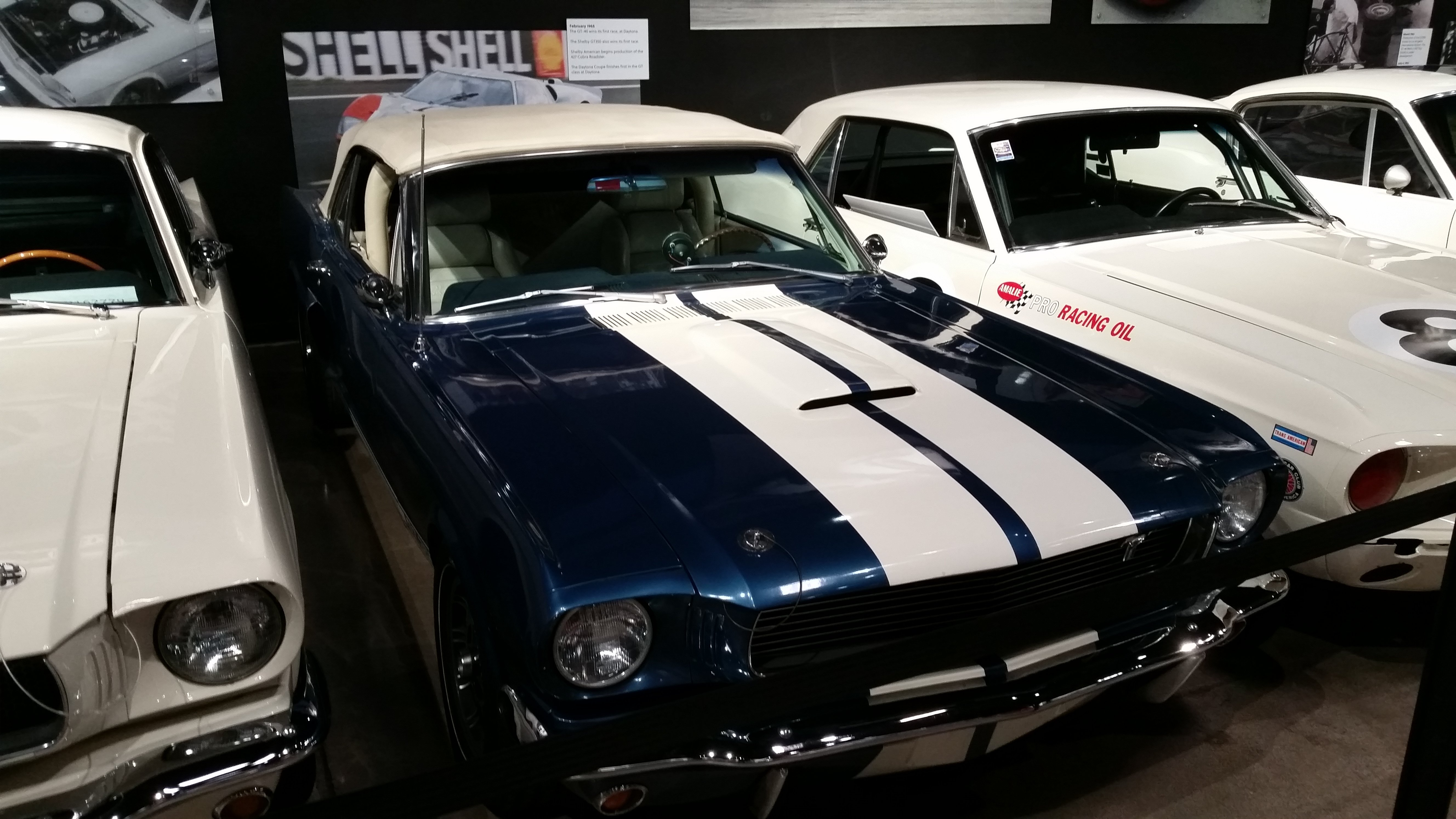 shelby7