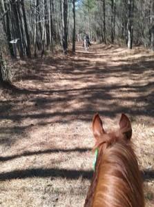passing horses